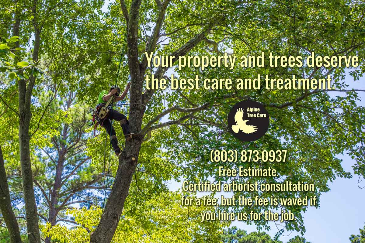 ISA Certied Arborist Tree Service in Lexington South Carolina - Blythewood - Columbia SC