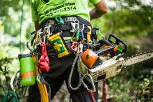 arborist equipment - Puma™ Harness by Buckingham