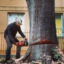 Removing a Tree on University of South Carolina Campus