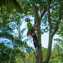 one step at a time - tree safety is the number one priority