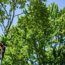 Throwing Rigging Line to a Limb Up Above