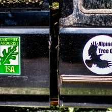 Certified Arborist - Alpine Tree Care