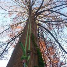 climbing rope installed in bald cypress