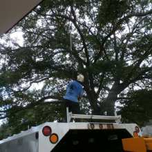 water oak tree trimming at Olympia-Granby Mill Village Museum Columbia South Carolina