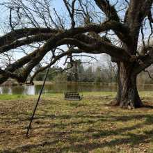 Swing Installation on Post Oak in Saluda