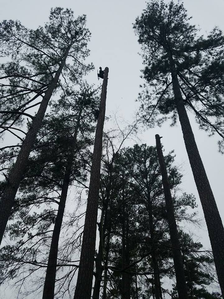 High pines at a residence on Lake Murray