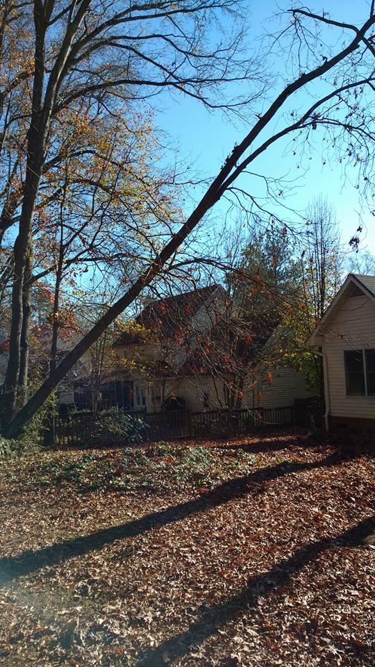 Hickory tree leaning over house in Lexington SC