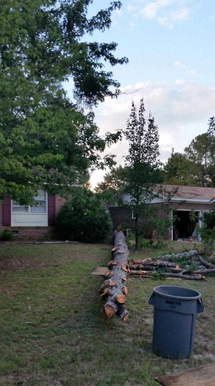 80ft pine tree struck by lightening