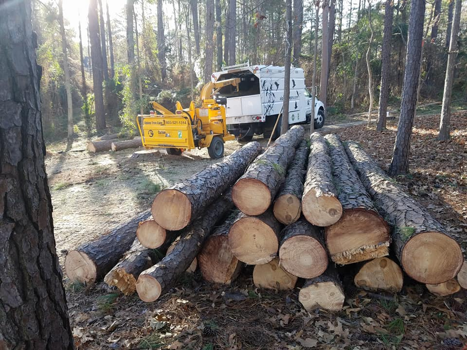 pine logs ready to be moved out