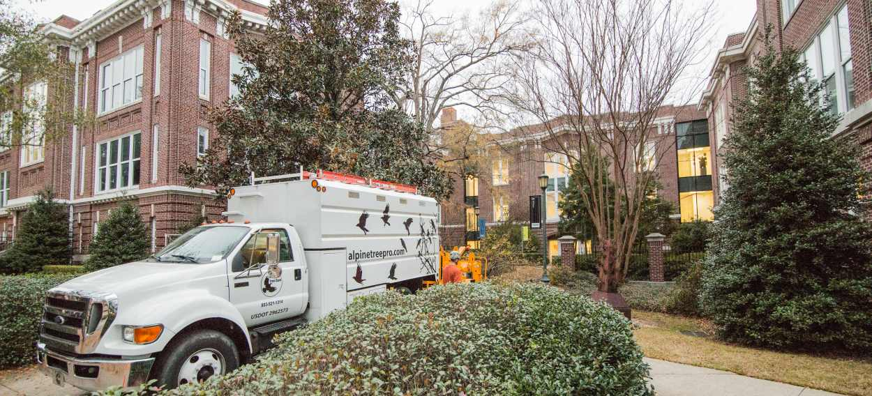 Alpine Tree Care at McMaster College Columbia SC