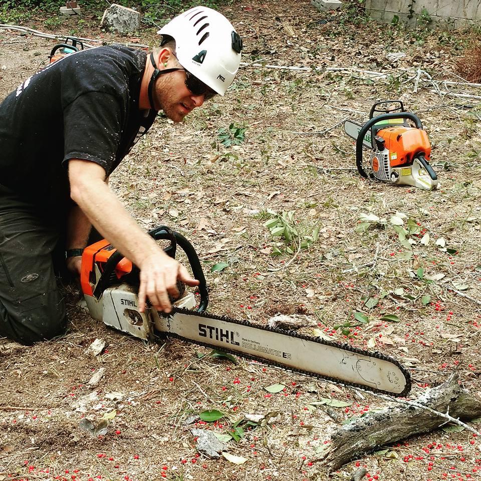 stihl chainsaw Water Oak Removal